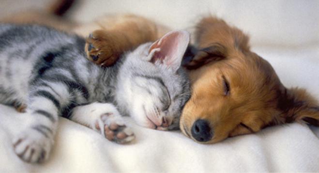 Lazy Dog Mothers Day
