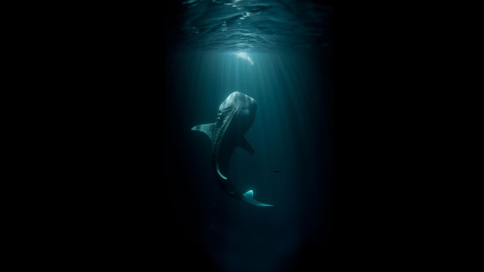 Whale Black Fish Underwater Ocean HD wallpaper creative and 1920x1080