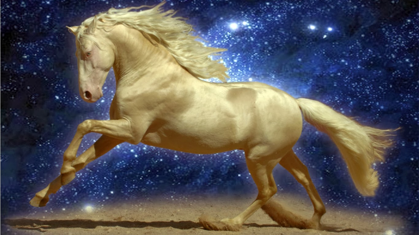 desktop horse and make this HD wallpapers desktop horse for 1366x768