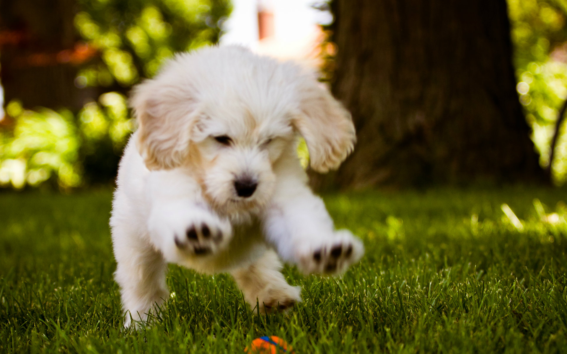 Wallpapers Collection Beautiful Dogs Wallpapers 1920x1200