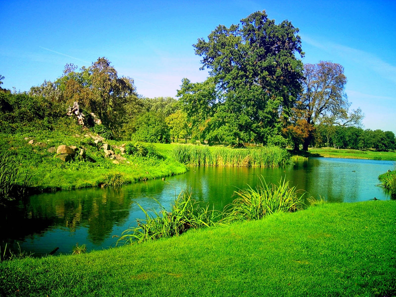 Tag Green Nature Wallpapers BackgroundsPhotos Images and Pictures 1600x1200