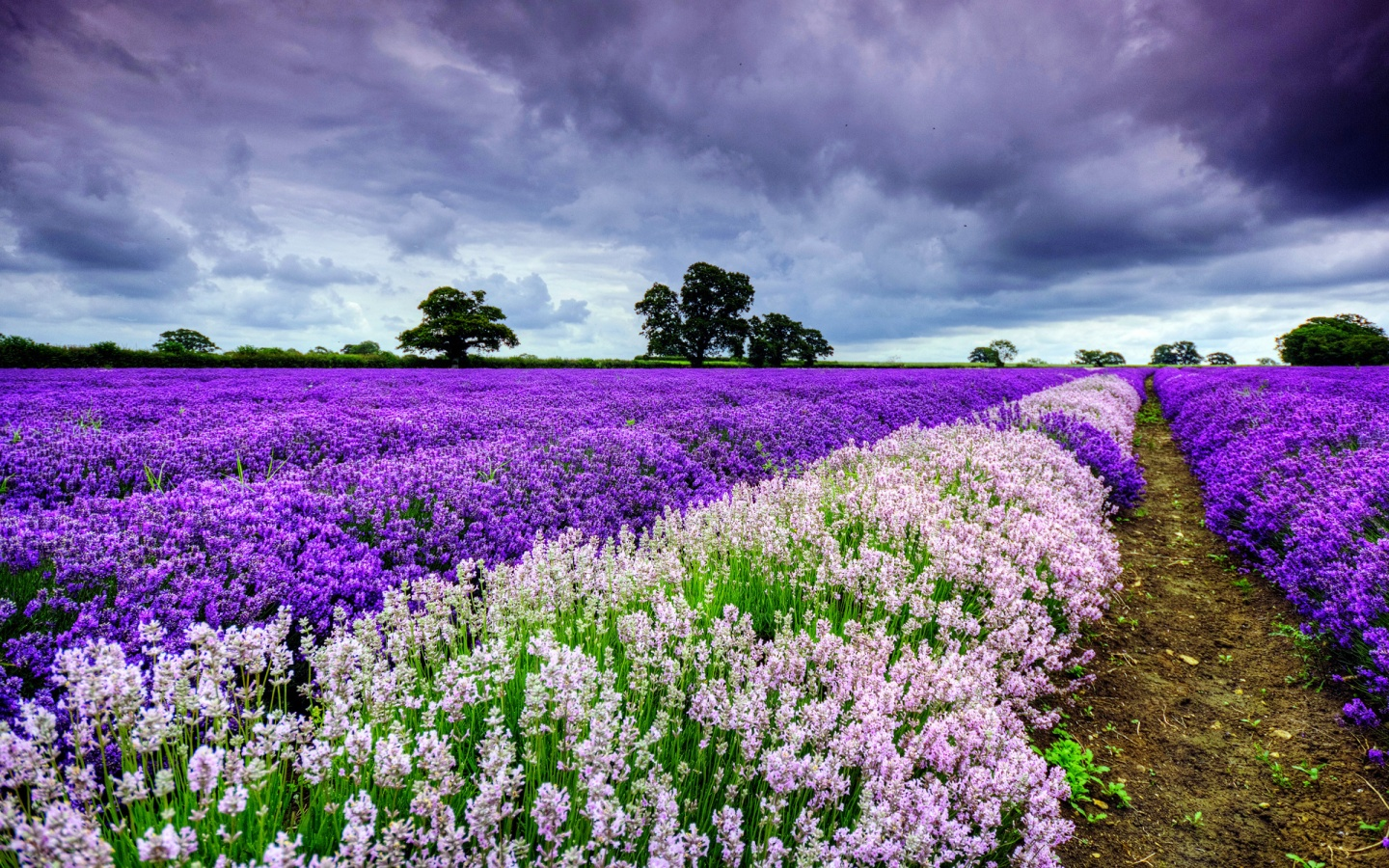 Spring Purple And White Flowers 1440 x 900 Download Close 1440x900