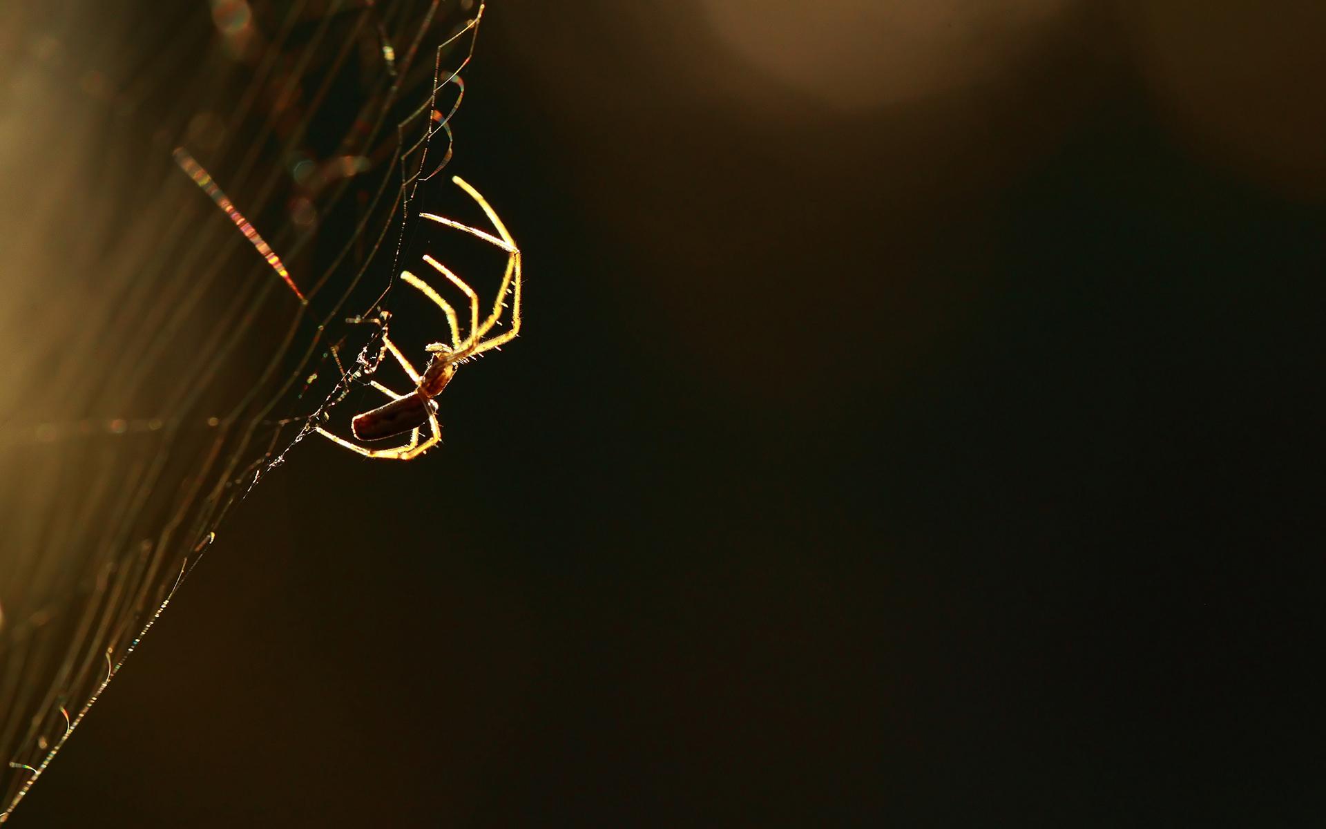 Spider Macro Spider Web wallpaper 1920x1200 79578 1920x1200