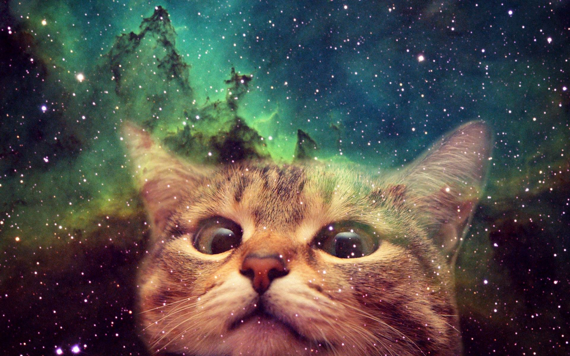 78 Space Cat Wallpapers on WallpaperPlay 1920x1200