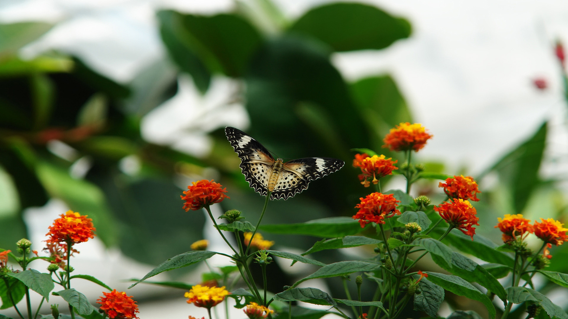 50+ Beautiful Butterfly Wallpapers for Desktop on ...