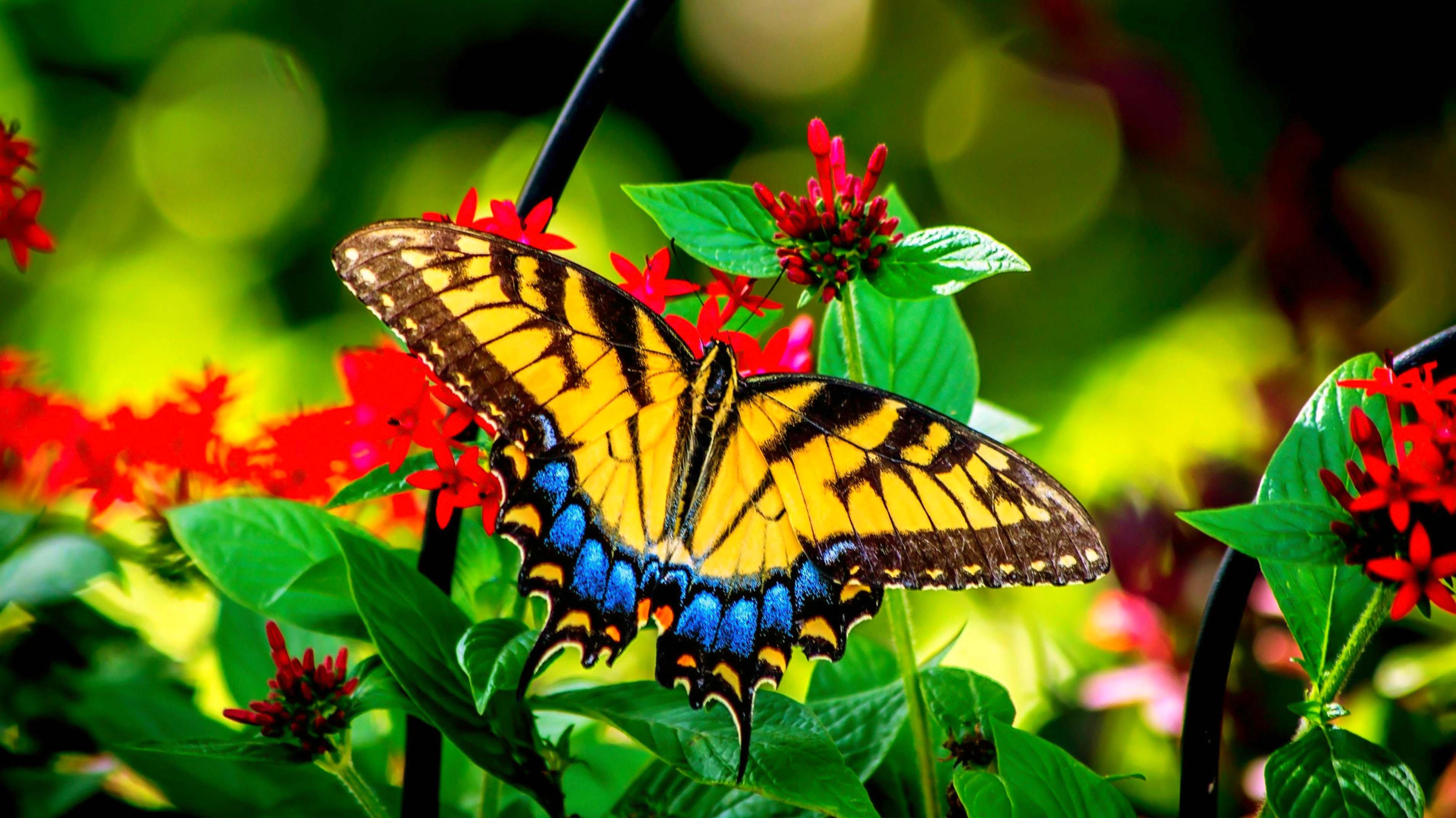 55 Colorful ButterflyHD Images Wallpapers Download 3816x2144
