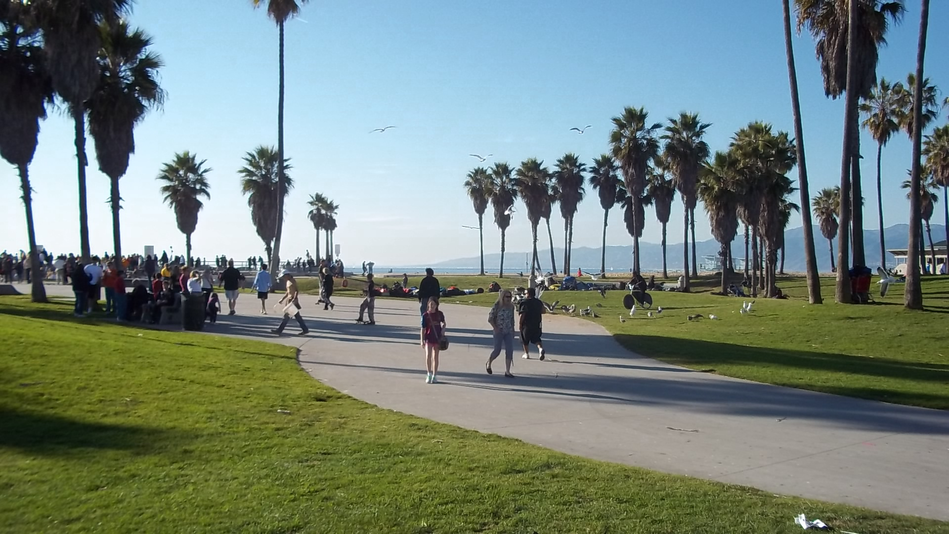Venice Beach Wallpaper 1920x1080
