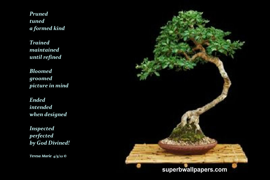 superbwallpaperscom bonsai 11946 400x250 900x600