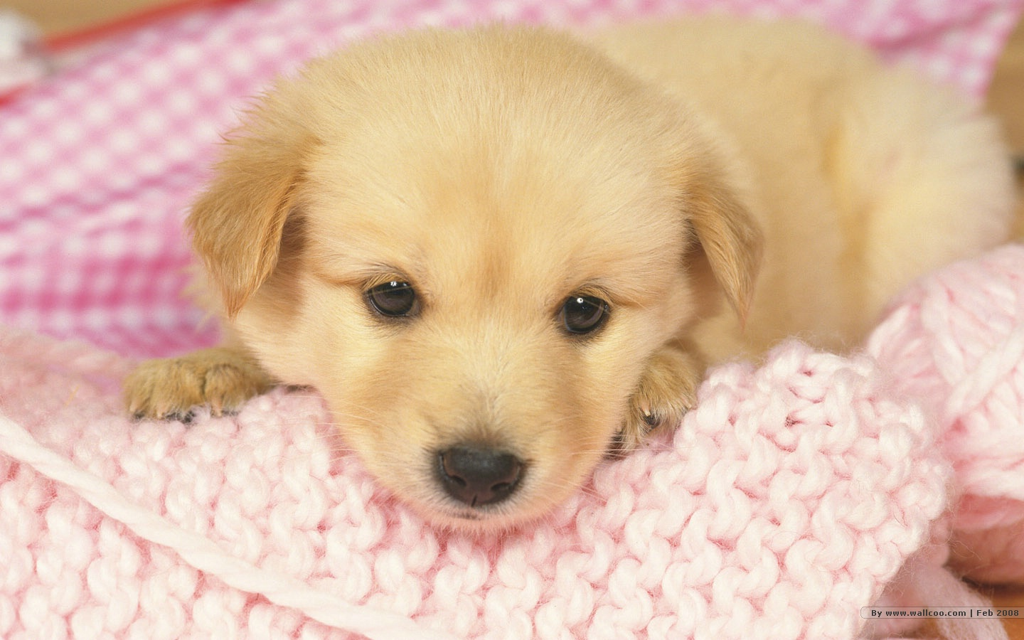 Puppy wallpapers Lovely Puppies Photos 1440900 NO52 Wallpaper 1440x900