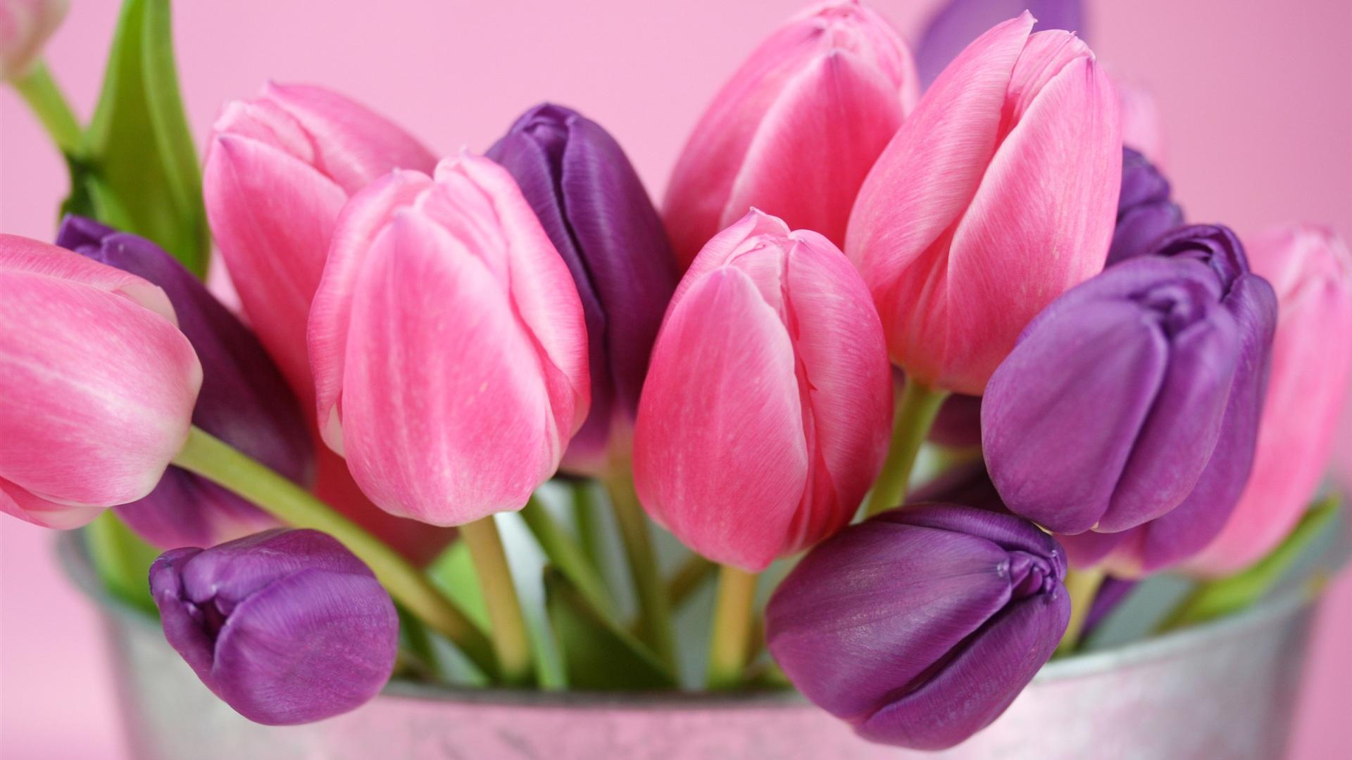 flowers tulips purple wallpaper pink flower wallwuzz hd wallpaper 1920x1080