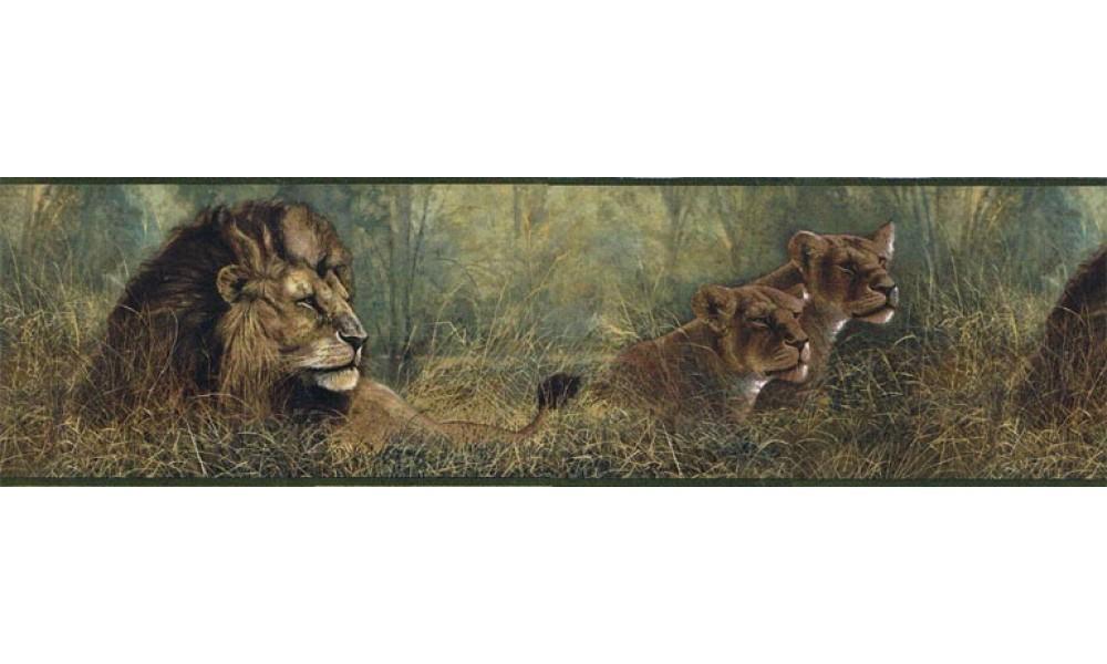 Home Animal Borders Wild Cats Animals Wallpaper Border B76464 1000x600
