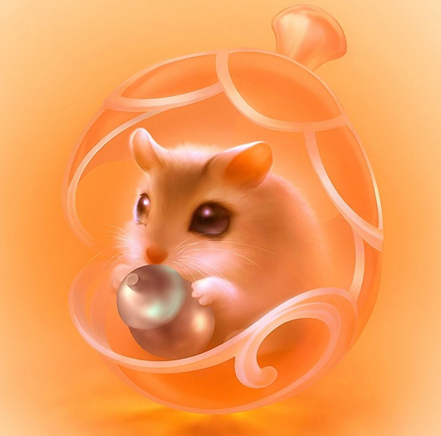 Hamster   159014   High Quality and Resolution Wallpapers on 1485x1467