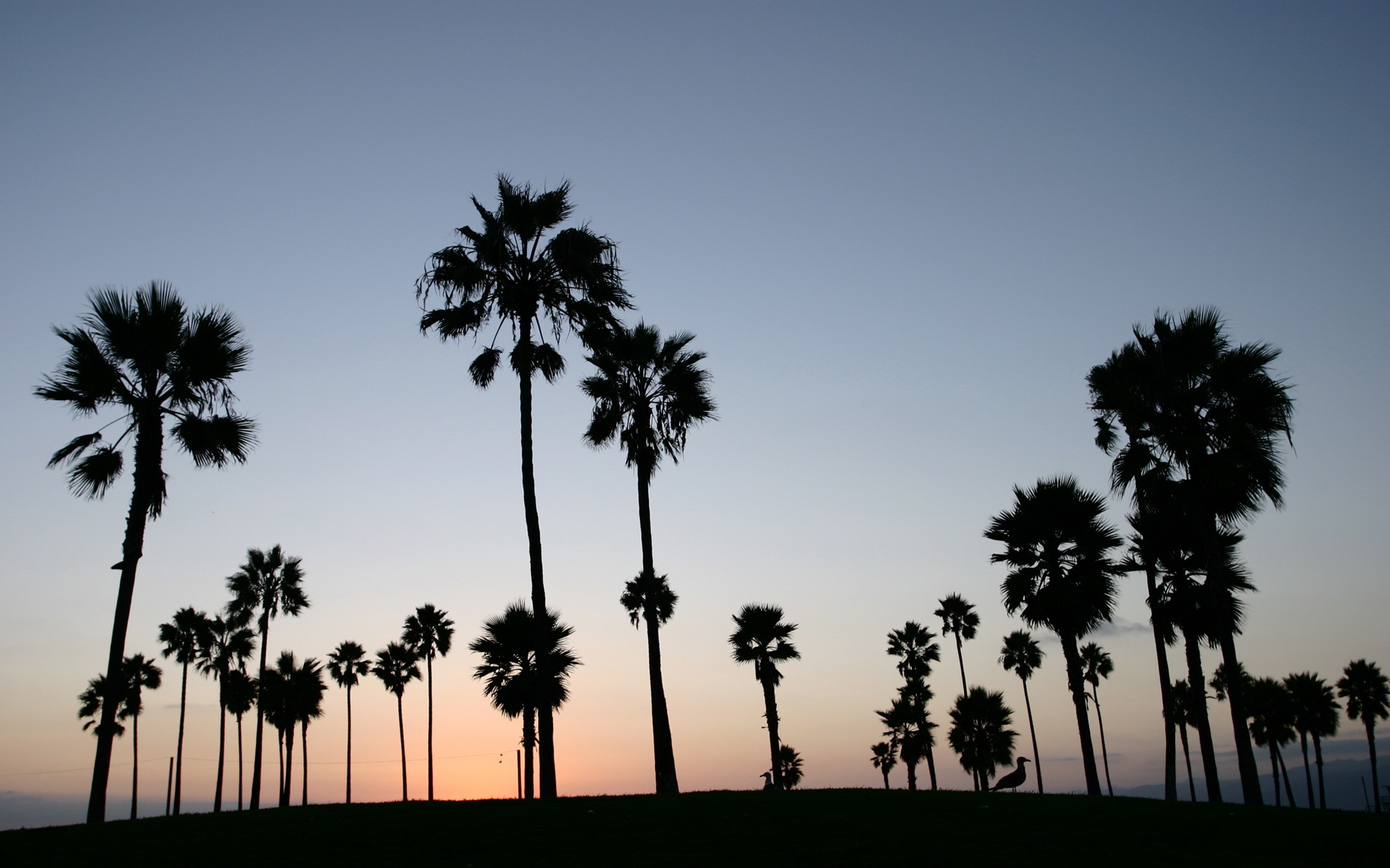 Wallpaper tropics sunset palm Venice Los Angeles Sunset at Venice 1920x1200