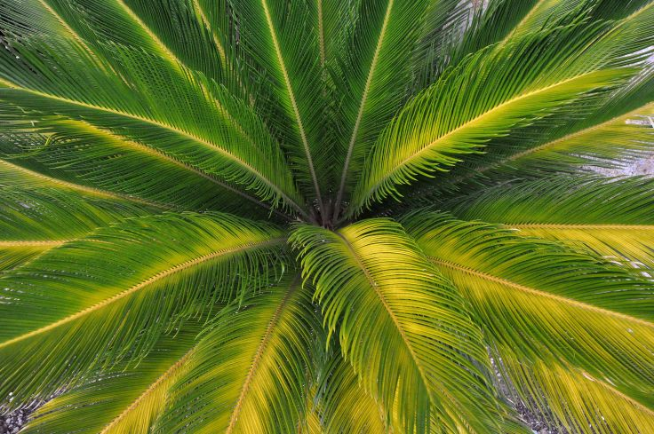 Palm leaves nature wallpaper 4288x2848 247281 WallpaperUP 736x489