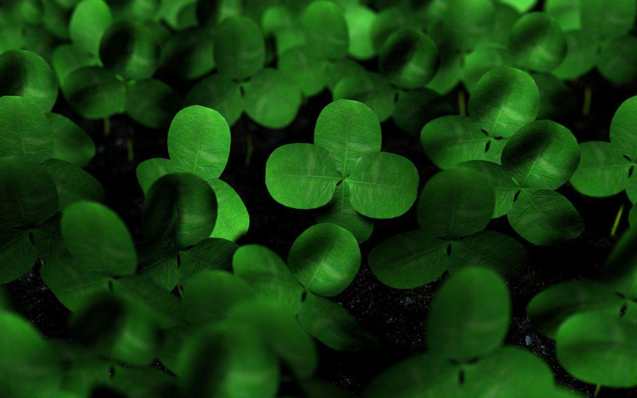 Lucky Charm Wallpapers 1280x800