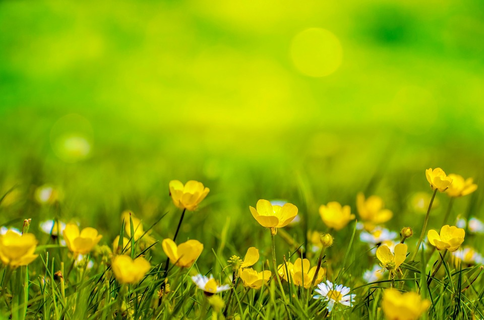 Spring Background Flower   photo on Pixabay 960x635