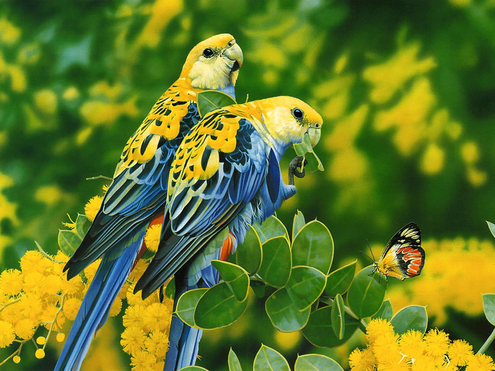 wallpapers Love Birds Desktop Wallpapers 1600x1200