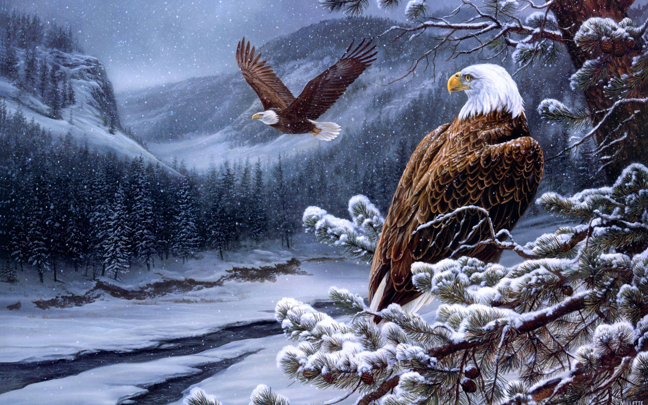 American Eagle Background Download   WallpaperAsk 2560x1600