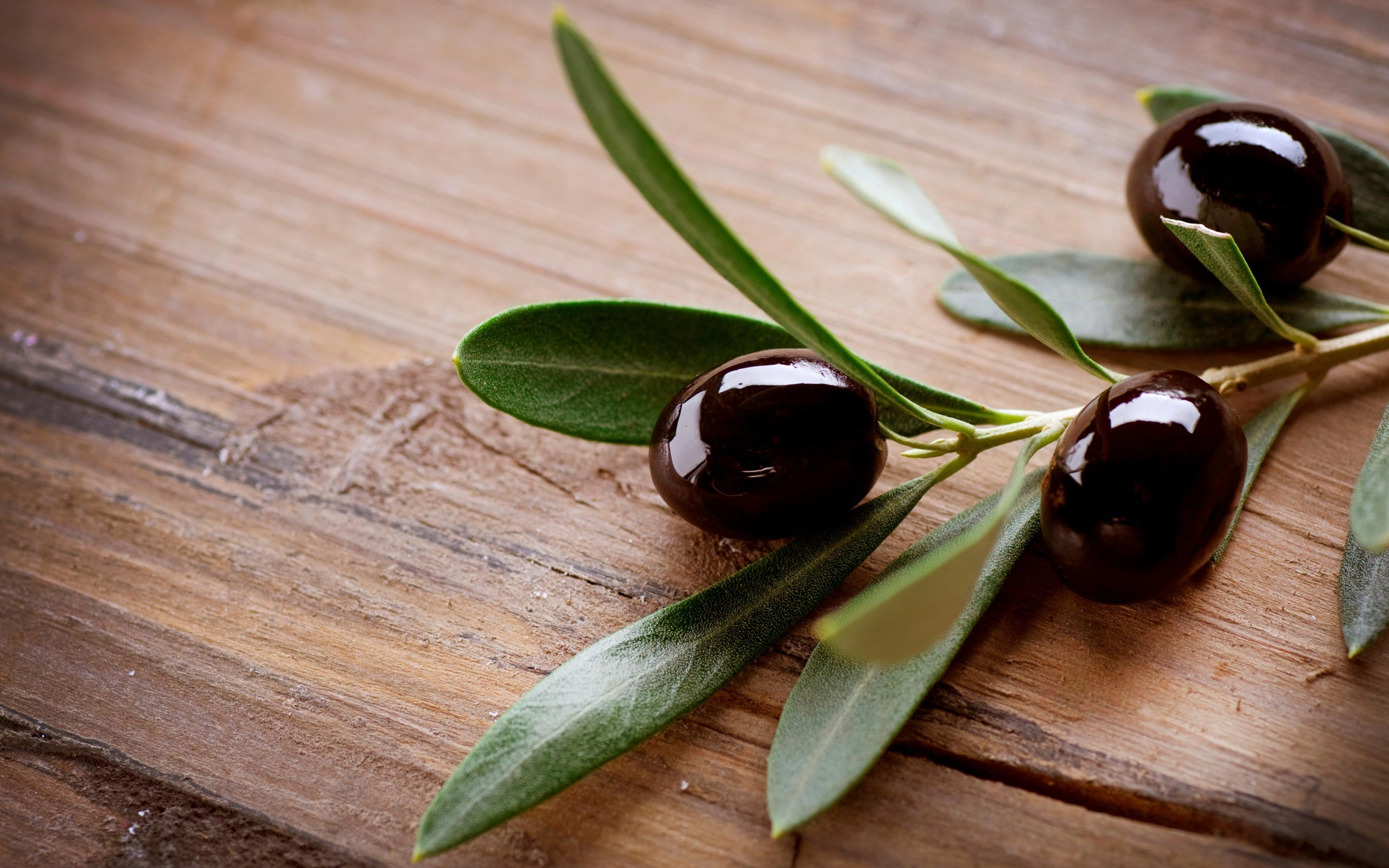 16 Olive HD Wallpapers Backgrounds 2560x1600