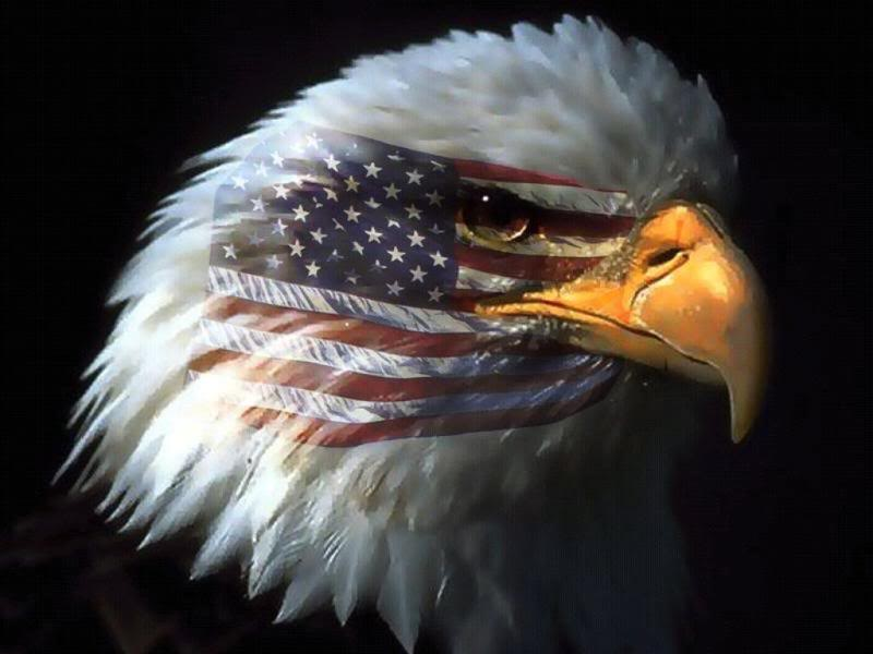 Patriotic Eagle Image   Patriotic Eagle Graphic Code 800x600