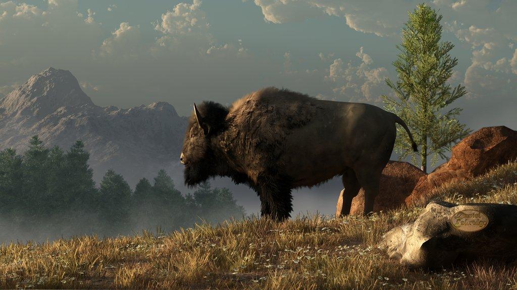 American Bison Wallpaper - WallpaperSafari