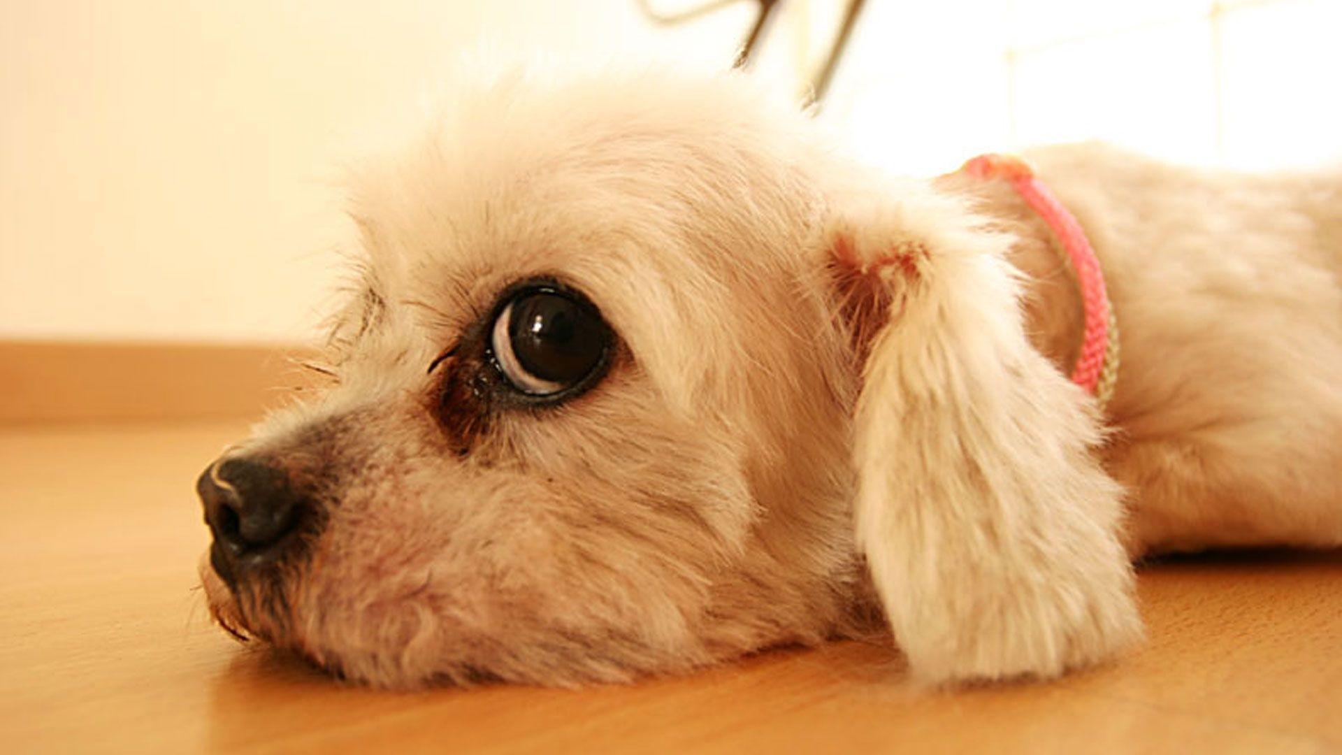 cute anime dog wallpaper - photo #35