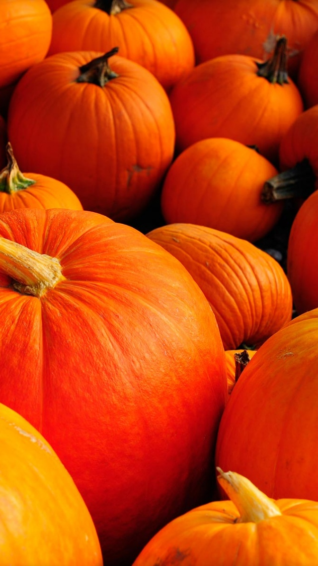 Autumn Pumpkins Iphone 5 Wallpaper   Pumpkin Background Hd 640x1136