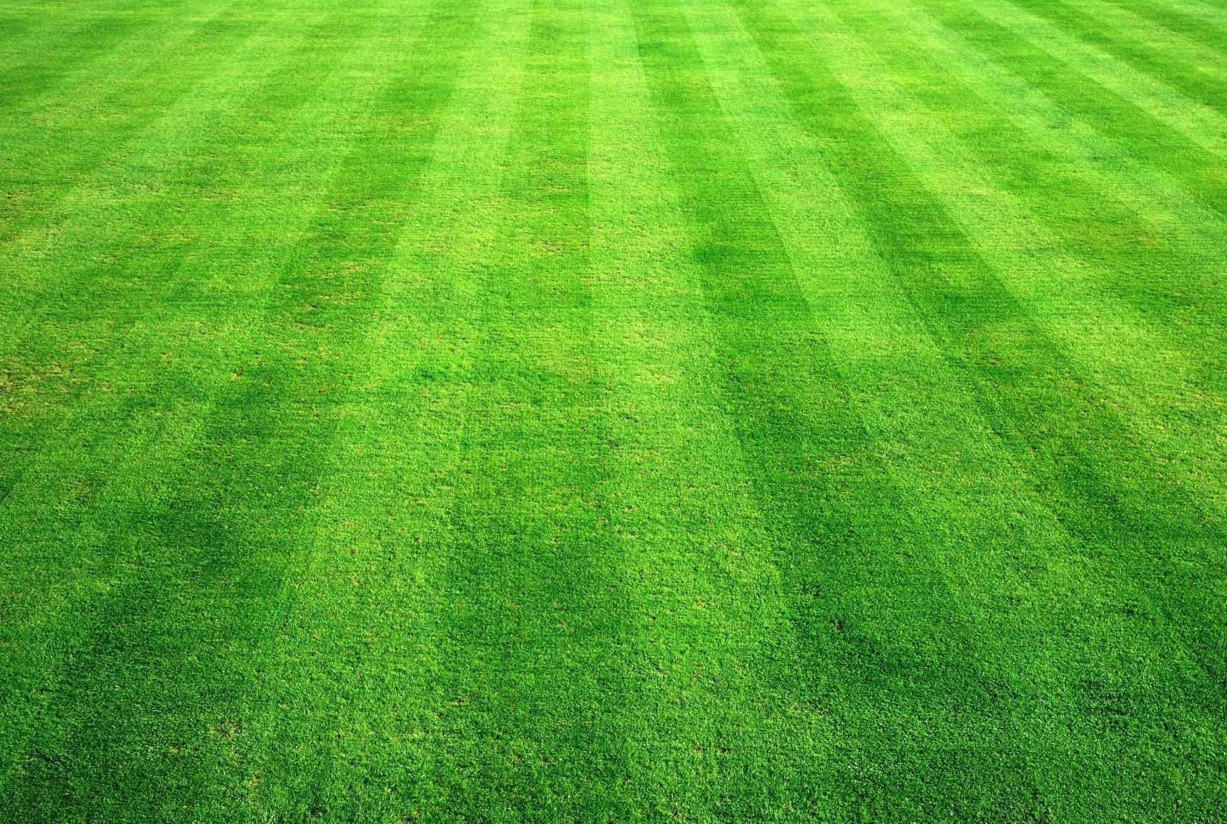 Background grass   SF Wallpaper 1725x1159