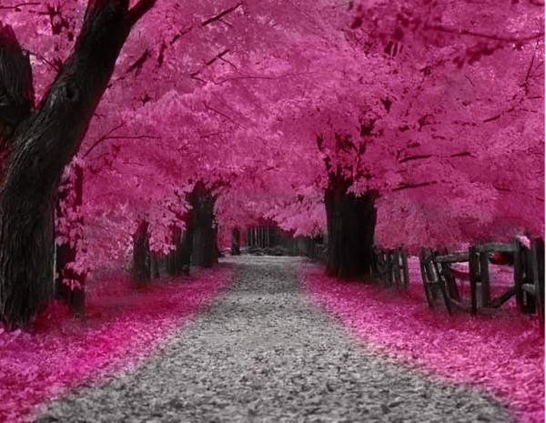 modern pink beauty shiny pink artistic deepest famous impressive 600x465