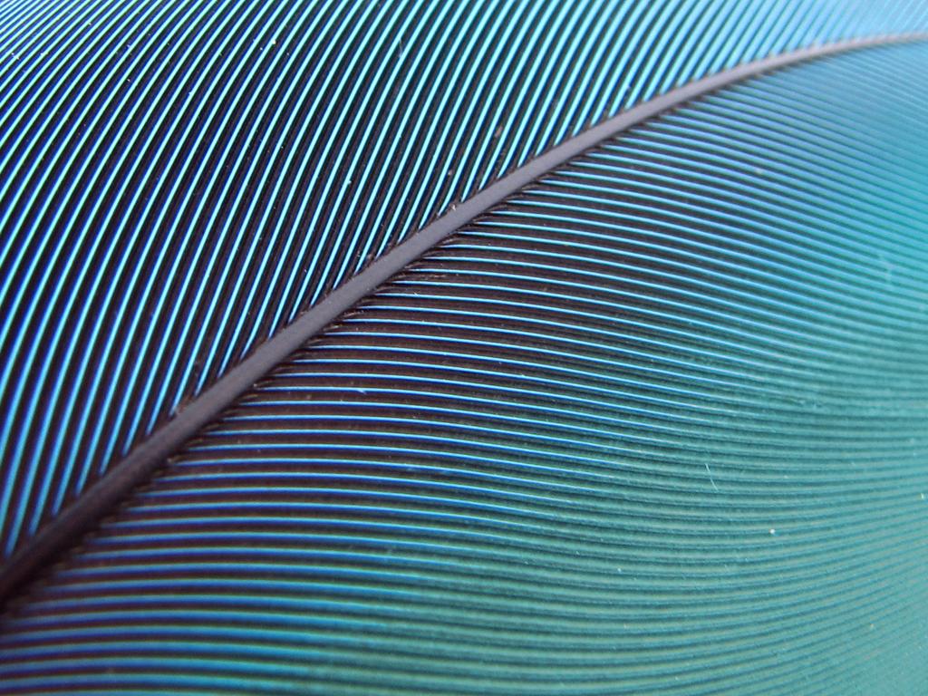 Blue Feather Wallpaper by MJFJ 1024x768
