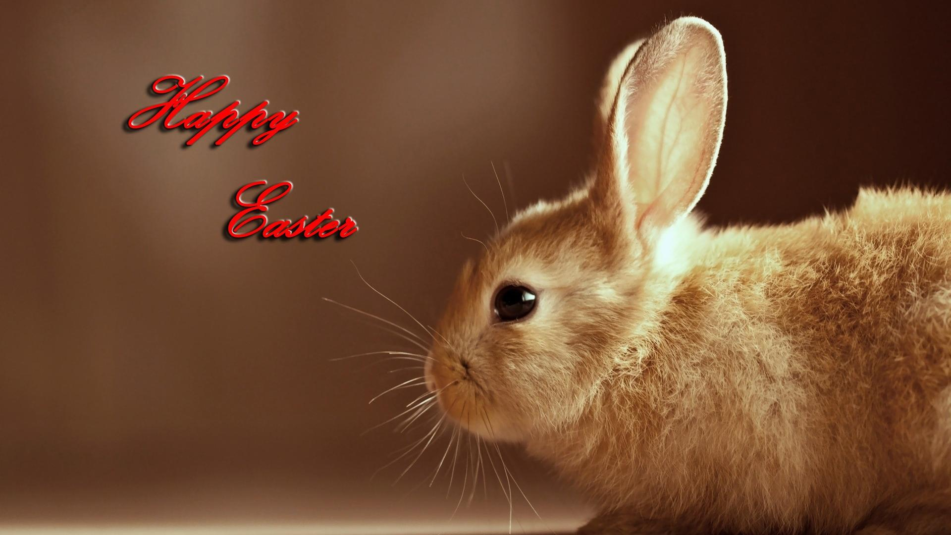 Happy Easter Bunny Pictures HD Wallpaper of Greeting 1920x1080