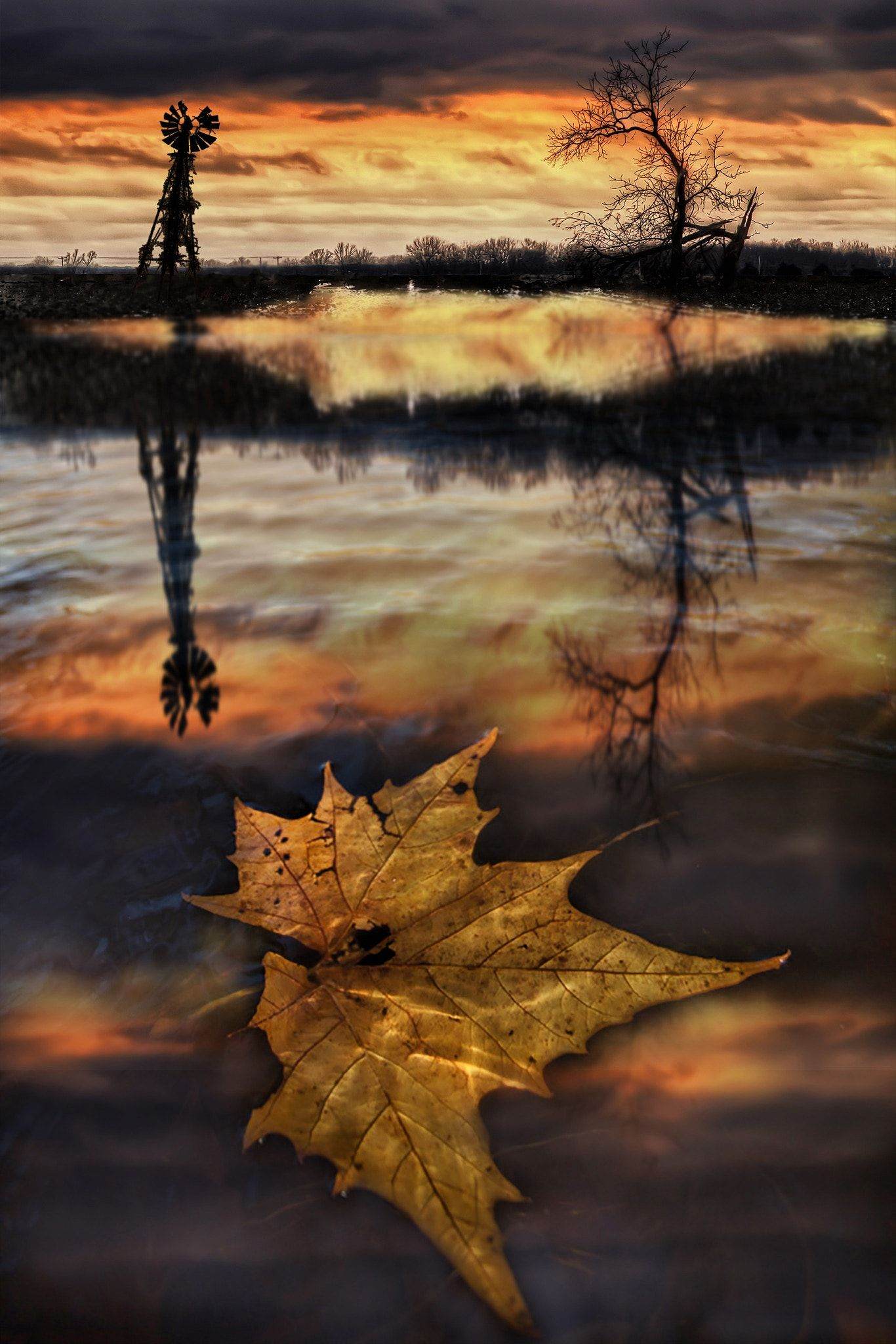 The Last Leaf   After the twister 1 Autumn Fall The last 1366x2048