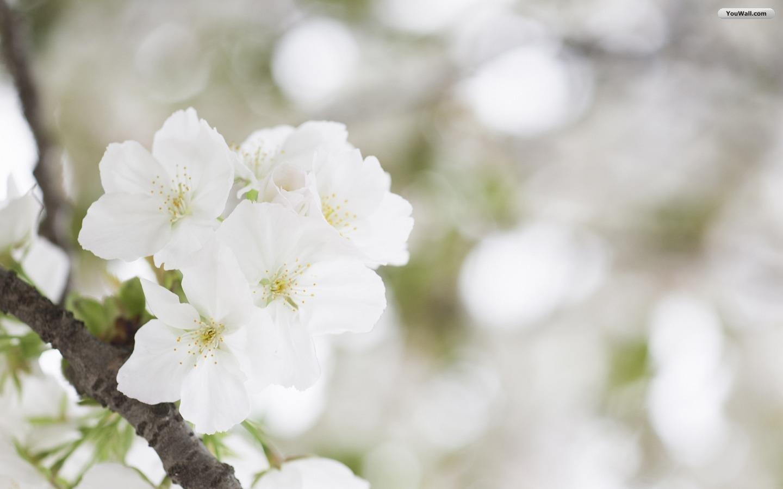 white flower wallpaper 1920x1080 - photo #2