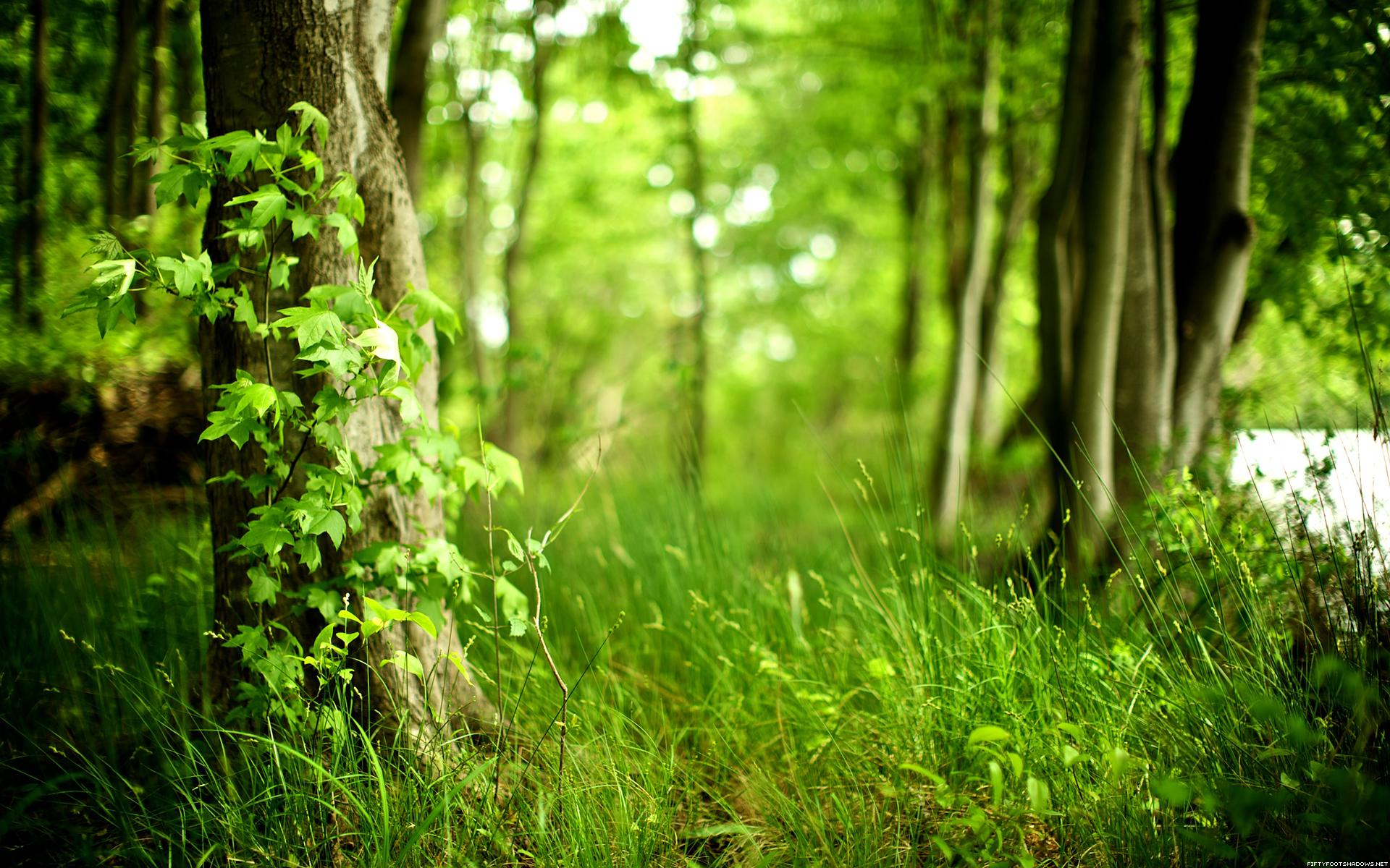Зеленая, летняя трава  № 1074232 загрузить