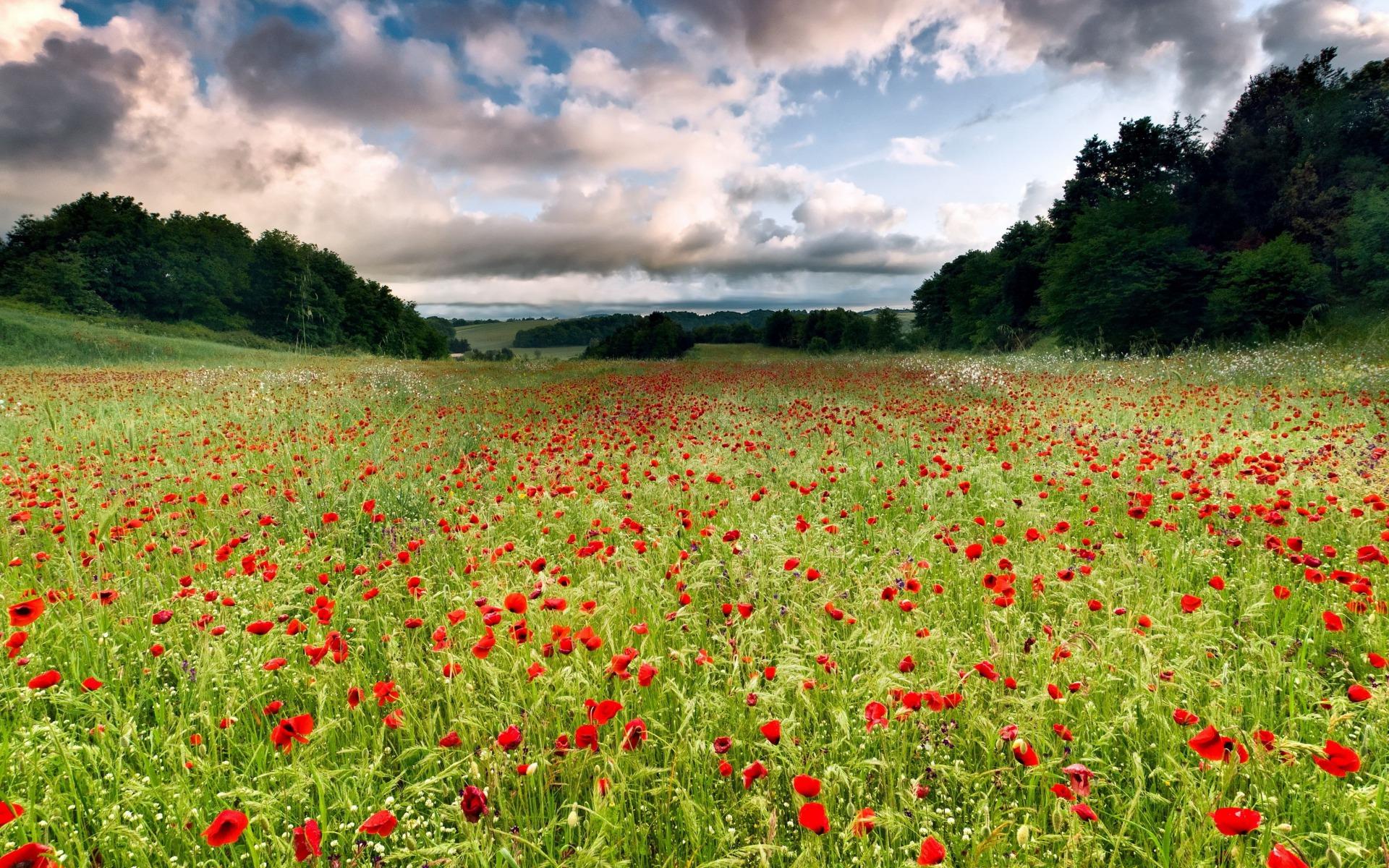 Beautiful Poppy Field wallpapers Beautiful Poppy Field stock photos 1920x1200