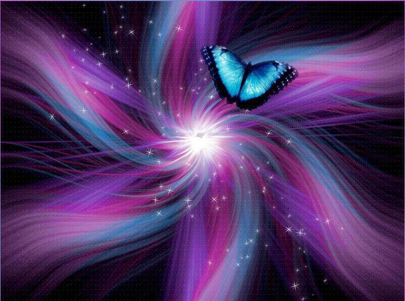 Indigo Butterfly   Butterflies Photo 23164679 800x594