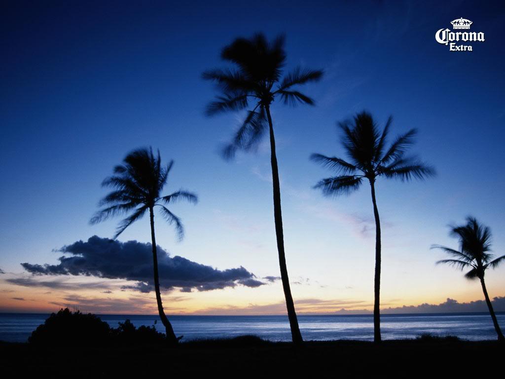 Corona Beach Wallpaper: Find Your Beach Corona Wallpaper
