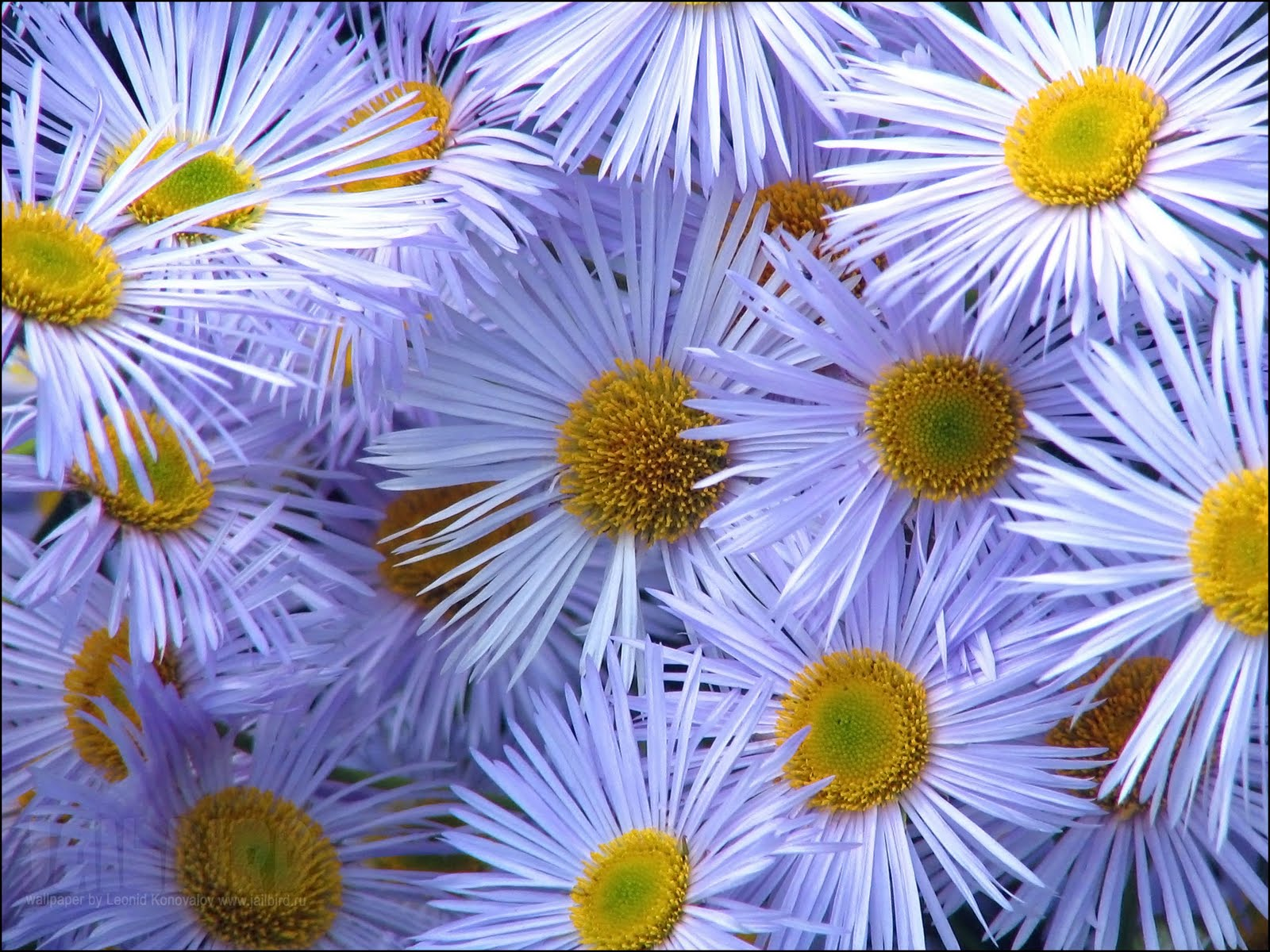 Desktop Wallpaper Desktop Wallpaper Flowers 1600x1200