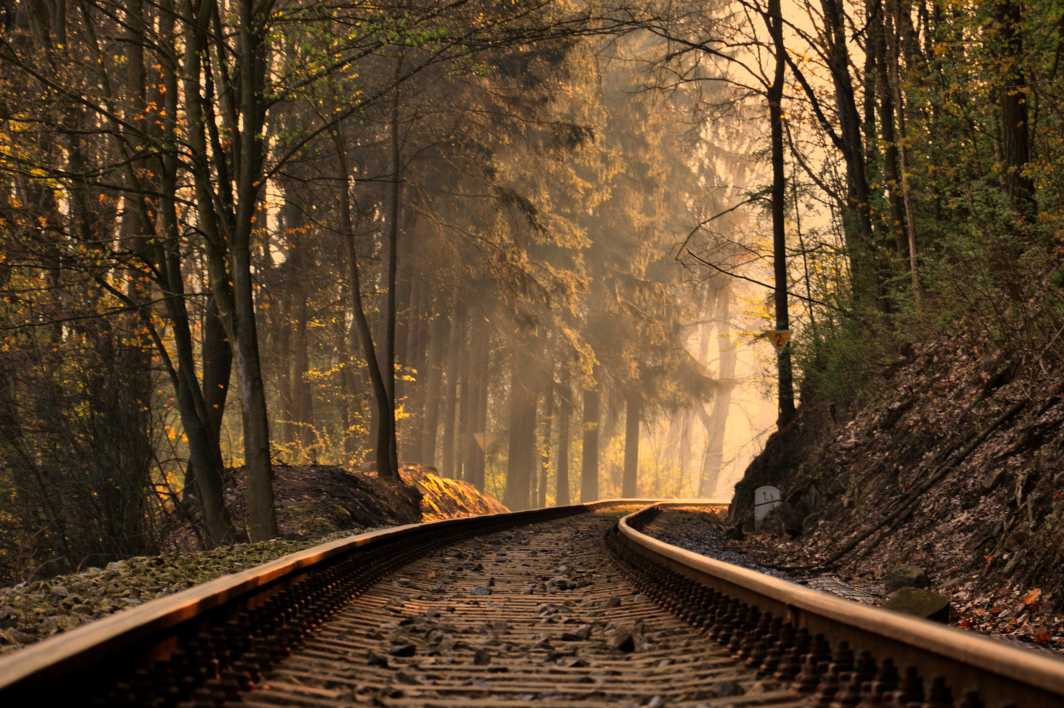 Railroad Forest train tracks trees wallpaper background 3602x2398