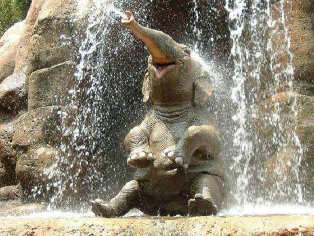 Baby Elephant In Waterfall Wallpaper 11751 Wallpaper ForWallpapers 1024x768