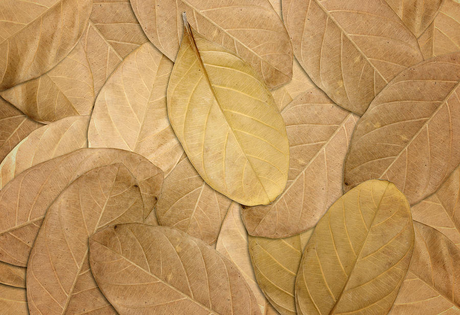 Dry Leaves Autumn Background Photograph by Natthawut Punyosaeng 900x617