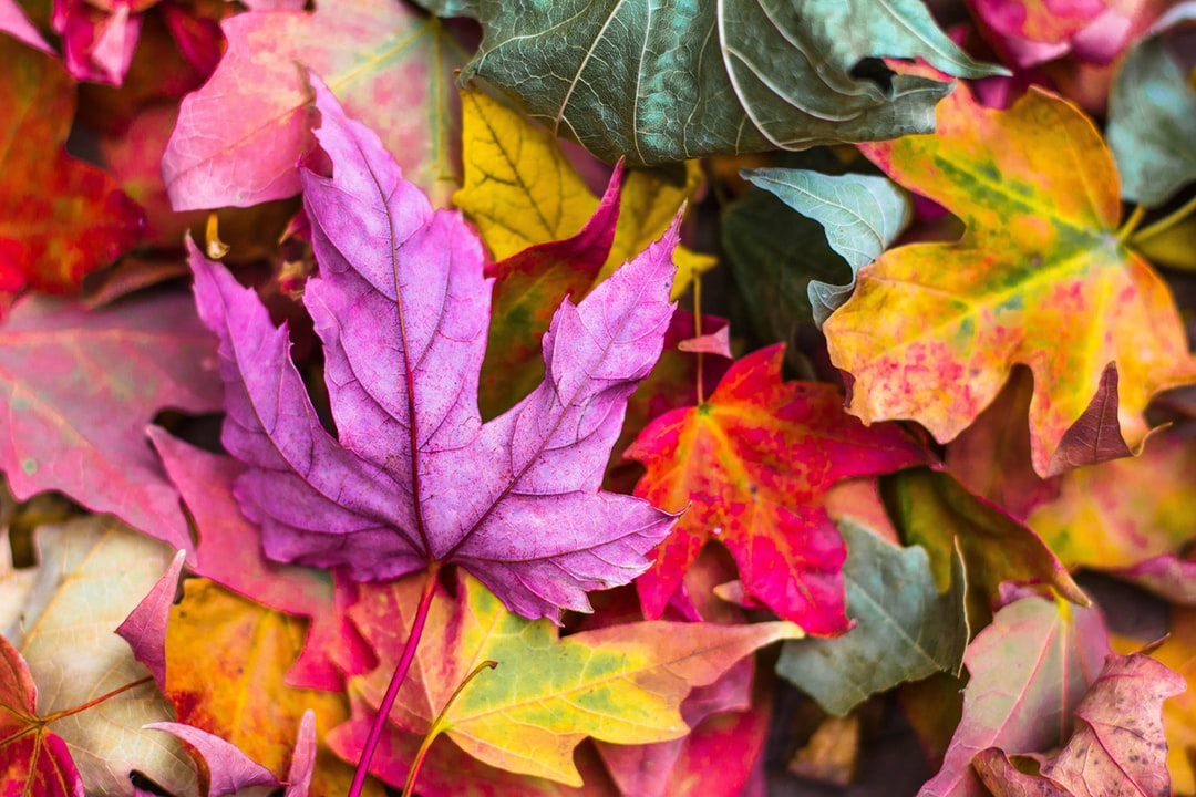 Fall Wallpapers HD Download [500 HQ] Unsplash 1080x720