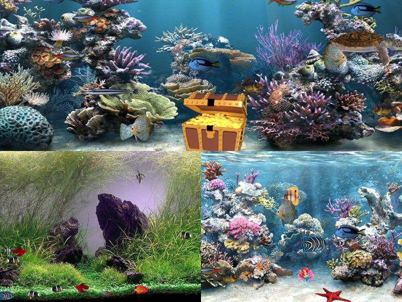 Aquarium Wallpaper For Windows 7 Wallpapersafari