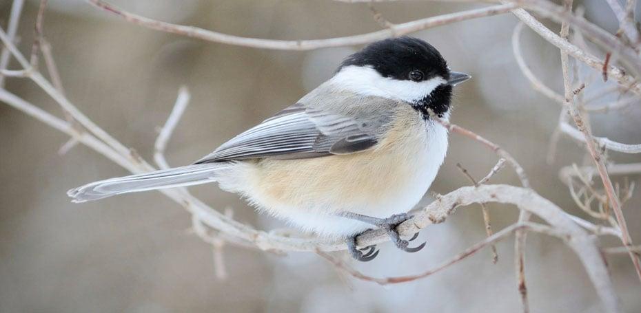 Birds in Winter Photos C a r W a l l p a p e r 2014 930x455
