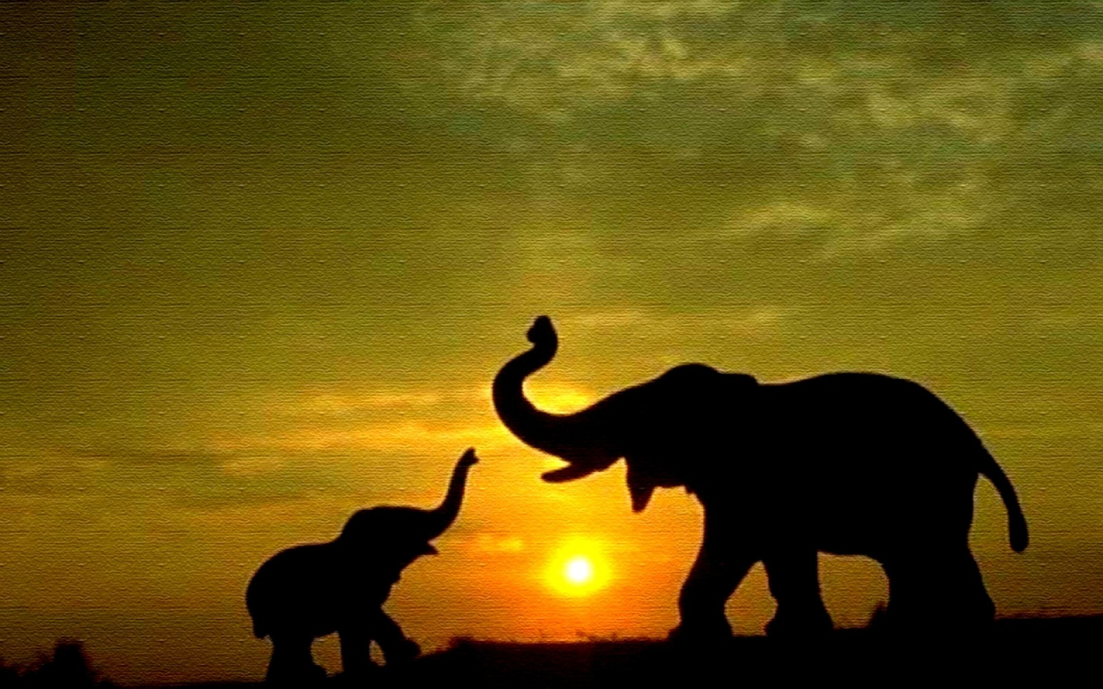 48 ] Elephant Wallpapers For Puters On WallpaperSafari