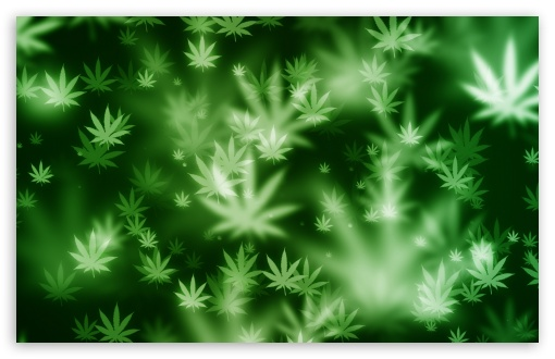 Weed Bokeh HD wallpaper for Standard 43 54 Fullscreen UXGA XGA SVGA 510x330