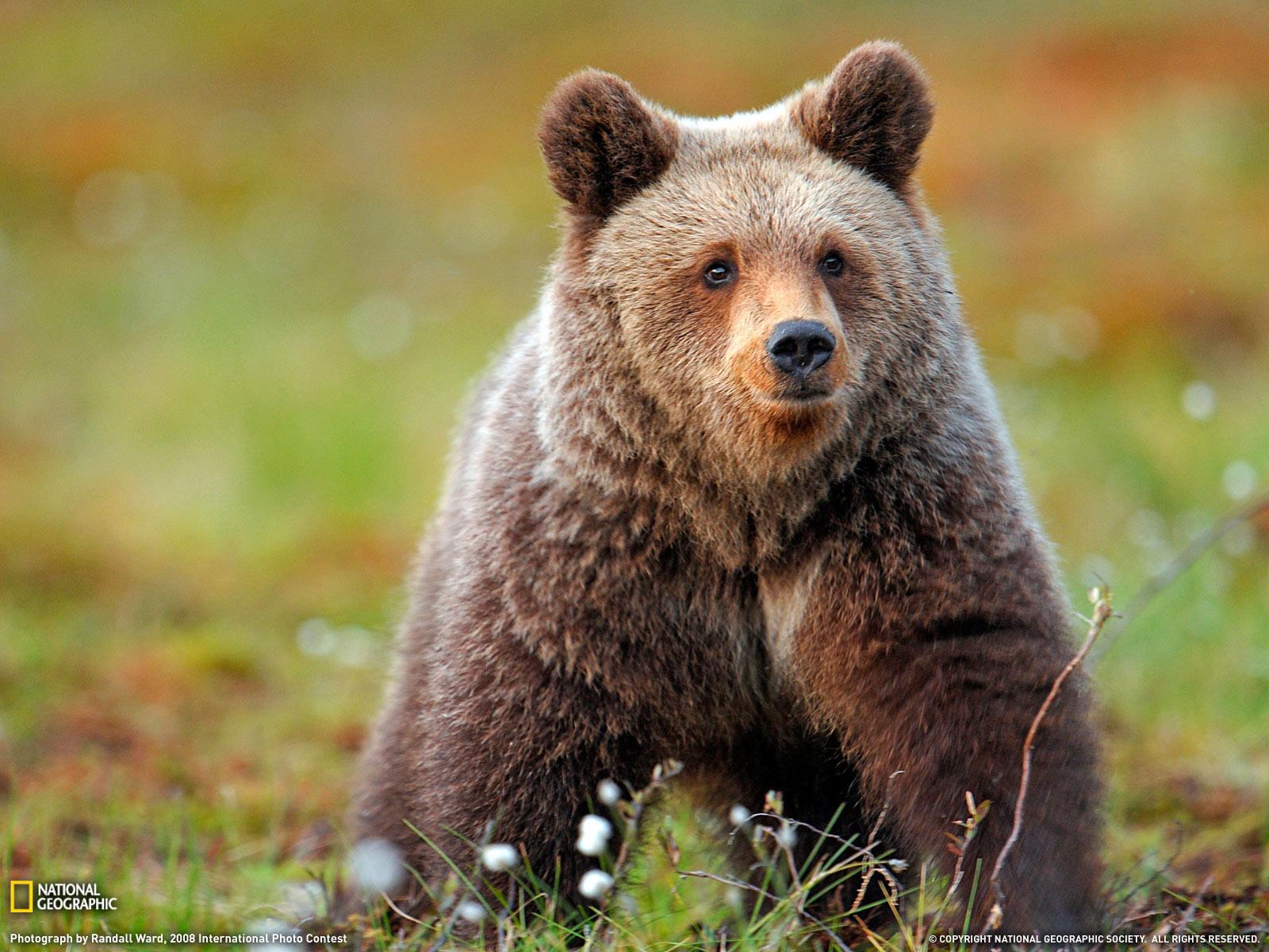 wild animals file size 436312 bytes dimensions 1600 x 1200 pixels wild 1600x1200