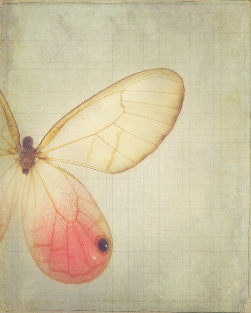 items for butterfly home decor on etsy style butterfly home decor 800x1000