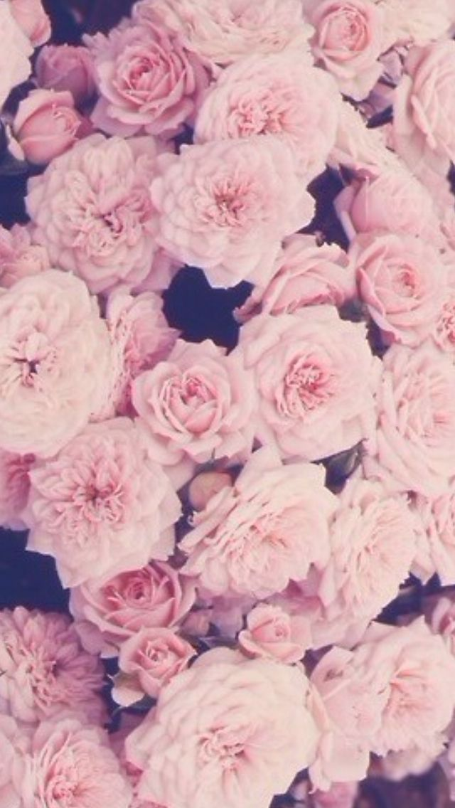 D Rose Wallpaper iPhone on WallpaperSafari